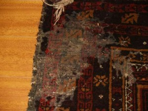 tulsa rug cleaner moth proofing